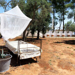 SIESTA OUTDOORS AMONG THE OLIVE TREES 2
