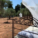 SIESTA OUTDOORS AMONG THE OLIVE TREES 4